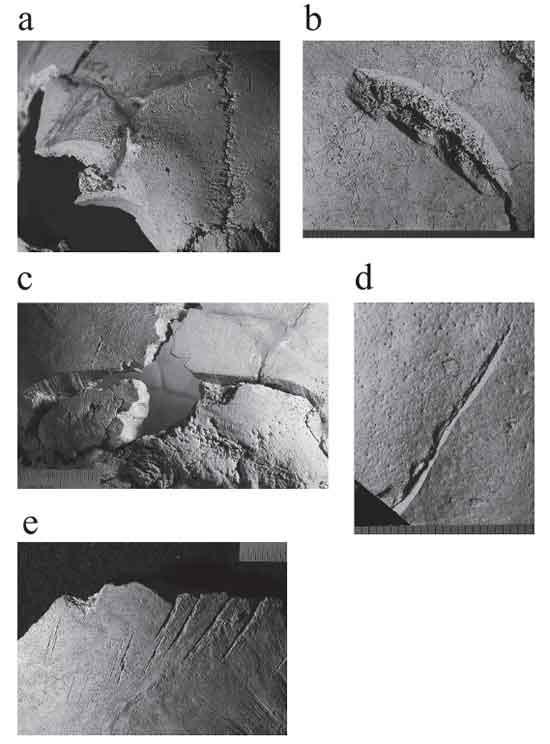 Photographs of cut marks